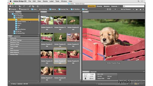 Accessing your images with Bridge: Photoshop CC 2015 for Photographers: Fundamentals