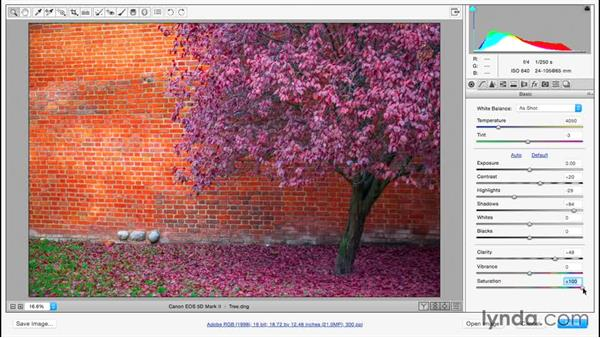 Making images pop using contrast, color, and clarity: Adobe Camera Raw Essential Training