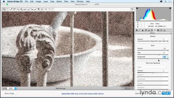 Emulating film grain textures: Adobe Camera Raw Essential Training