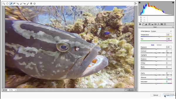 Correcting color cast in Camera Raw: Photoshop CC 2015 One-on-One: Fundamentals