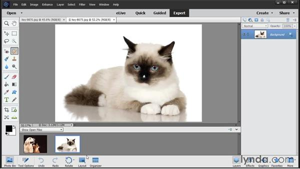 Overview of Elements workspaces: Photoshop Elements 14 Essential Training