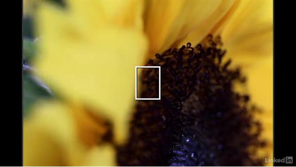 Getting creative using less obvious focus: Learn Photography: Autofocus
