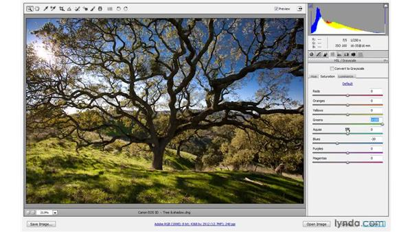 Adjusting luminance, color by color: Photoshop CS4 One-on-One: Advanced