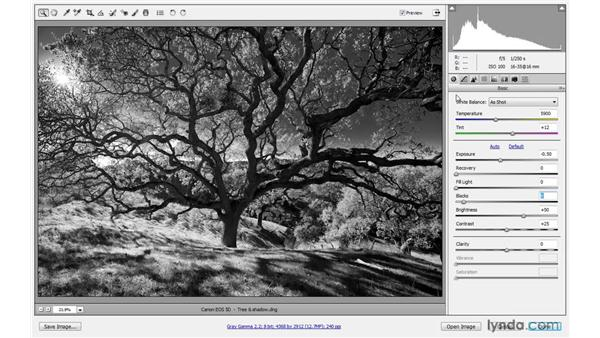 Black and white and split toning: Photoshop CS4 One-on-One: Advanced