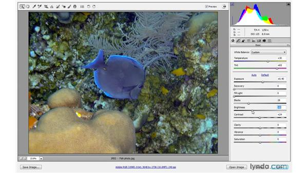Correcting JPEG and TIFF images: Photoshop CS4 One-on-One: Advanced