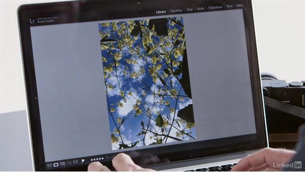 Nik Collection plugins: Photoshop and Lightroom Everywhere: Mobile, Desktop, Cloud