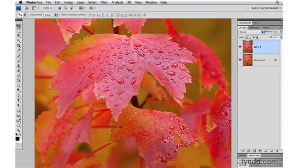 Reducing halos when sharpening with Lighten: Photoshop Blend Mode Magic