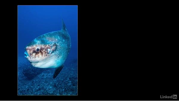 Wide-angle underwater: Underwater Photography: Wide Angle