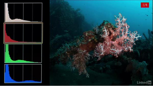 Strobes and the red channel: Underwater Photography: Wide Angle