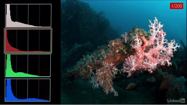 Shutter speed and the blue channel: Underwater Photography: Wide Angle