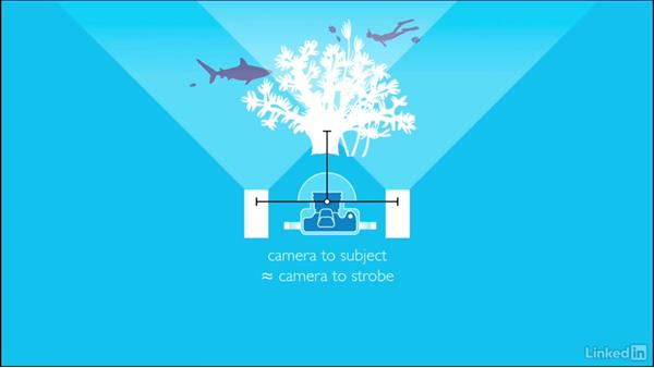 Getting closer: Underwater Photography: Wide Angle