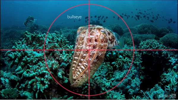 Bull's-eye or center frame: Underwater Photography: Wide Angle