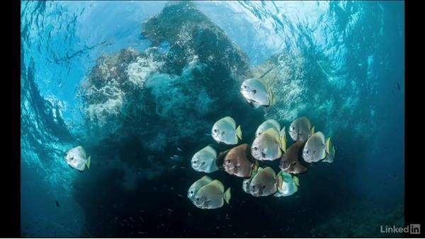 The golden spiral: Underwater Photography: Wide Angle