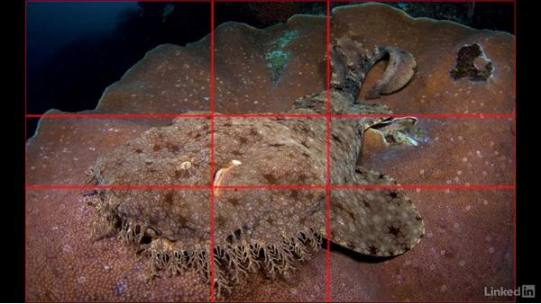 The golden ratio: Underwater Photography: Wide Angle