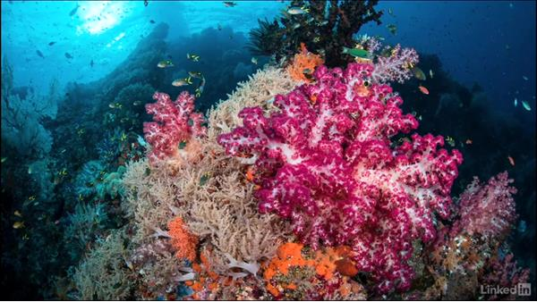 Advanced wide angle: Underwater Photography: Wide Angle