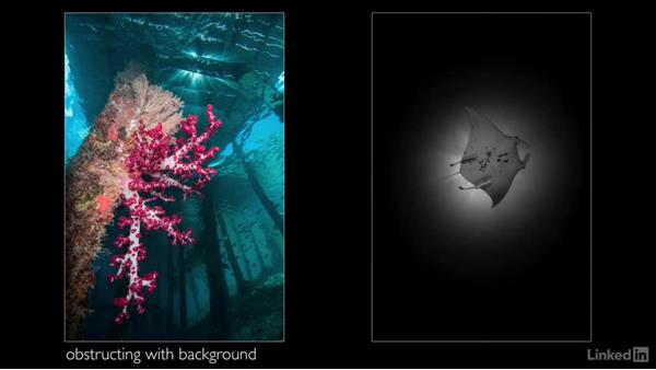 Capturing rays of sunlight: Underwater Photography: Wide Angle