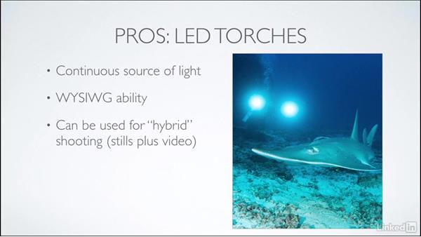 Pros and cons of strobes and torches: Learning Underwater Photography