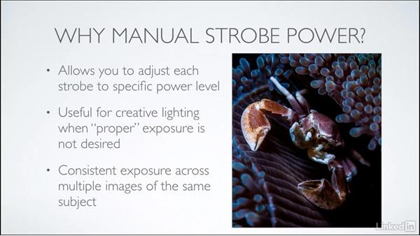 Adjusting strobe power: Learning Underwater Photography