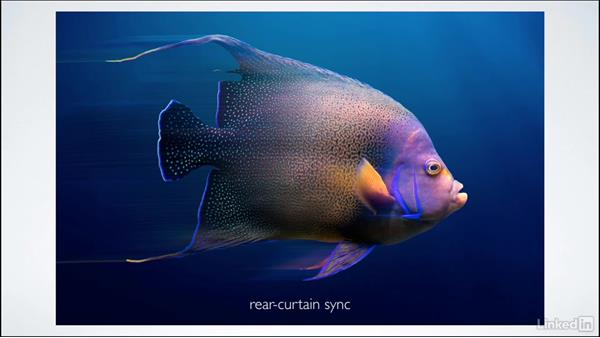 Understanding X-sync: Learning Underwater Photography