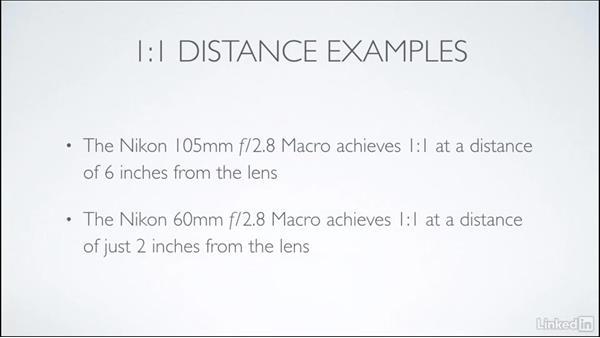Longer vs. shorter focal length: Learning Underwater Photography