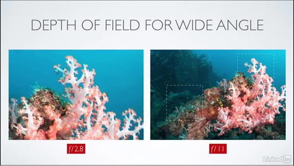 Depth of field: Learning Underwater Photography