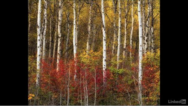 Shooting fall color photography in your own backyard: Landscape Photography: Autumn