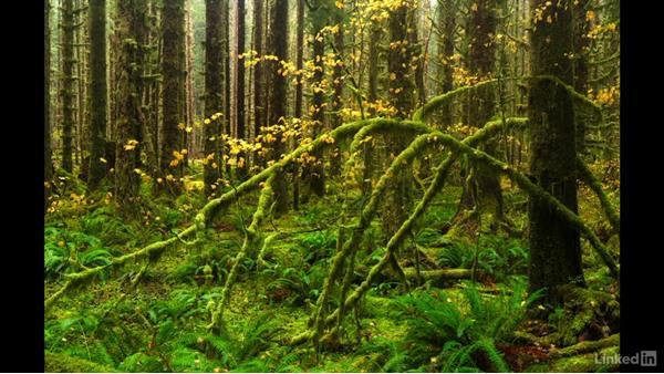 Next steps: Landscape Photography: Autumn