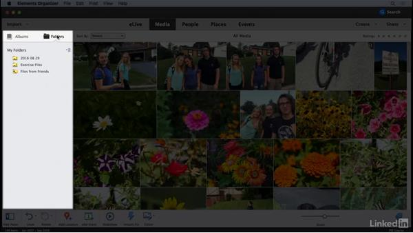 The Elements Organizer interface: Learning Photoshop Elements 15