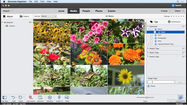 Adding keywords to photos: Learning Photoshop Elements 15