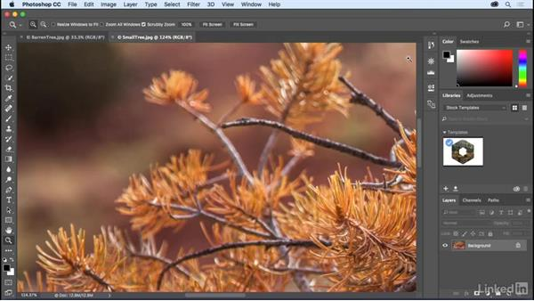 Panning and zooming documents: Photoshop CC 2017 Essential Training: The Basics