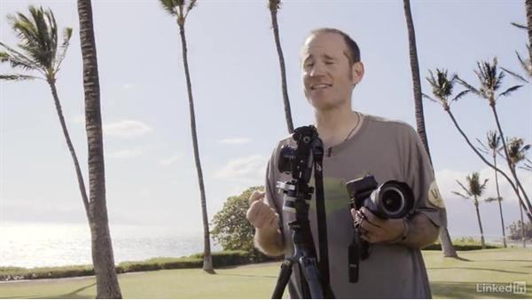 Photographing palm trees in infrared: Infrared Photography: Nature and Landscapes