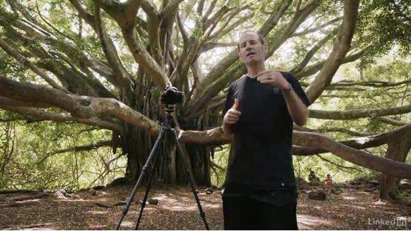 Photographing a banyan tree in Infrared: Infrared Photography: Nature and Landscapes