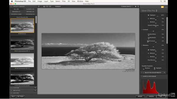 Editing the wind swept tree in B&W: Infrared Photography: Nature and Landscapes