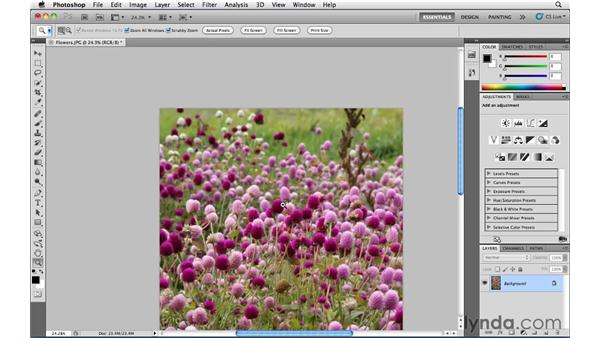 Pan and zoom: Photoshop CS5 Essential Training