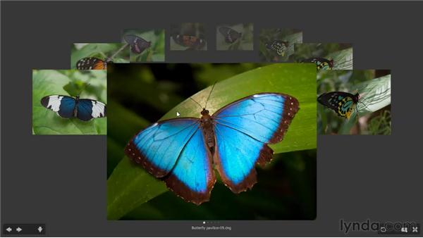 Comparing images in Review mode: Photoshop CS5 One-on-One: Fundamentals
