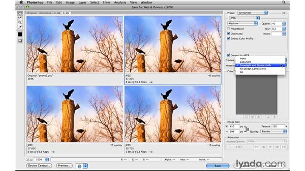 Adding copyright information: Photoshop CS5 for the Web