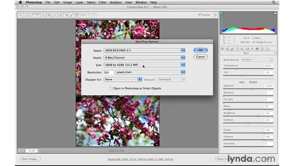 Understanding the web photo workflow: Photoshop CS5 for the Web