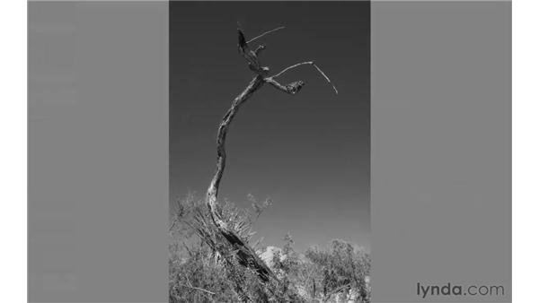 Why use black and white for images?: Photoshop CS5: Landscape Photography