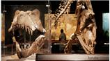 Image for Natural History Museum of Los Angeles County: Storytelling