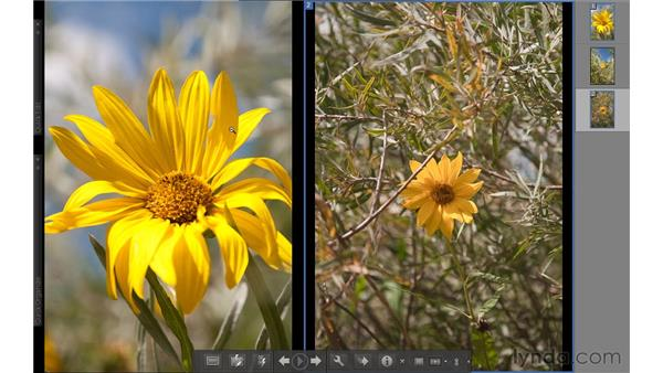 Comparing photos: Photoshop Elements 9 Essential Training