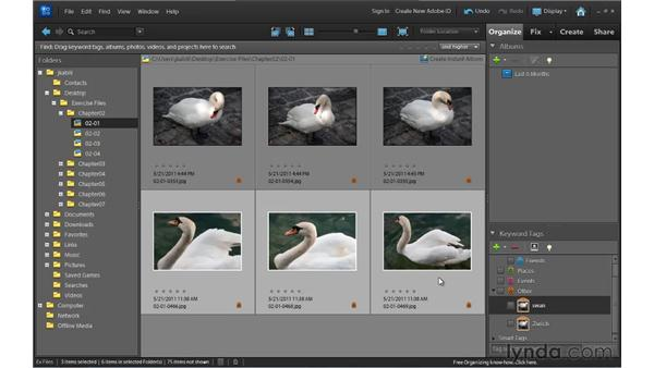 Keyword tagging: Up and Running with Photoshop Elements 10
