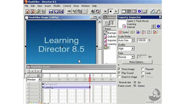 flash files part 1: Learning Director 8.5