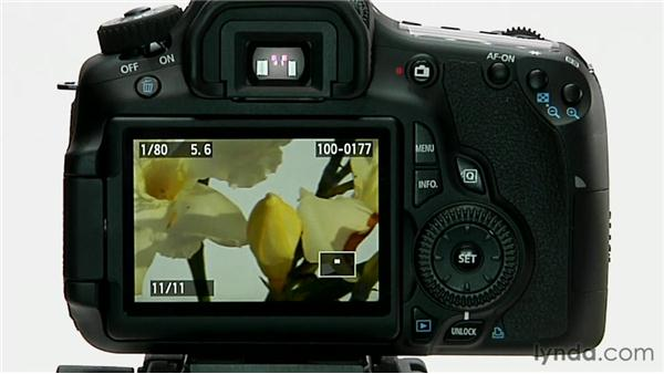 Image playback: Shooting with the Canon 60D