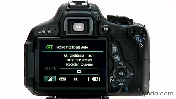 The LCD screen: Shooting with the Canon Rebel T3i (600D and Kiss X5)